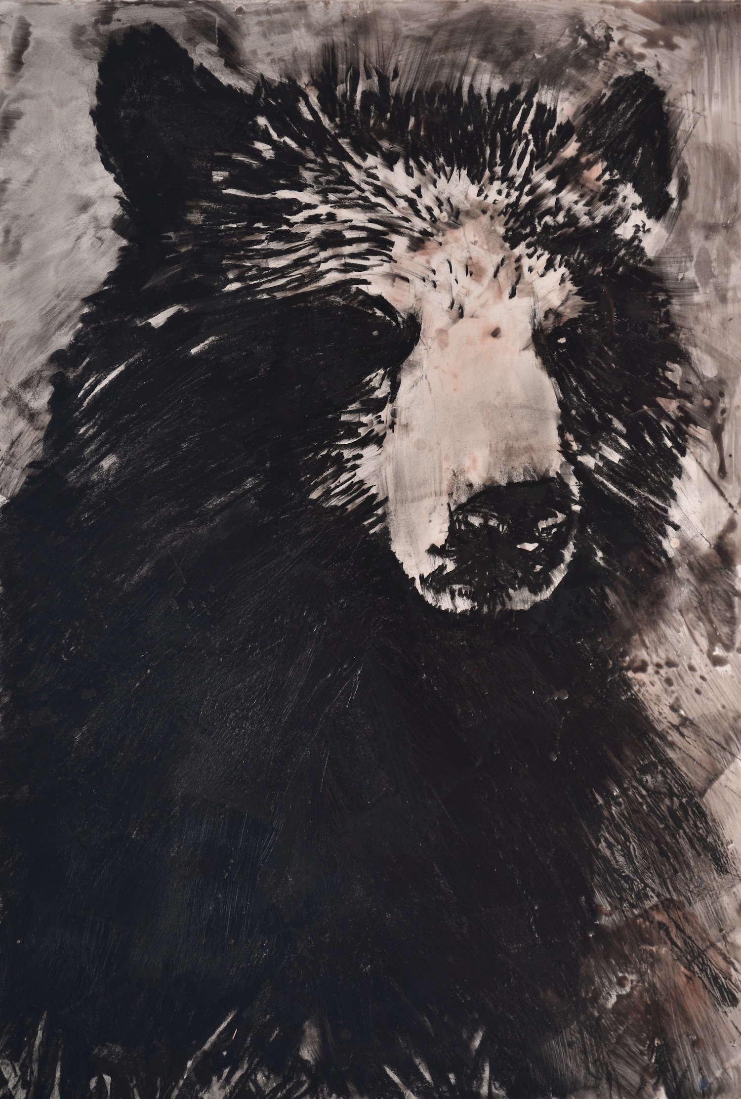 "Ragged Bear, 40"" x 30"", charcoal and microcrystalline wax on paper, 2013"