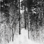 "Snow Trail no. 5, 30"" x 22"", charcoal and microcrystalline wax on paper, 2009"