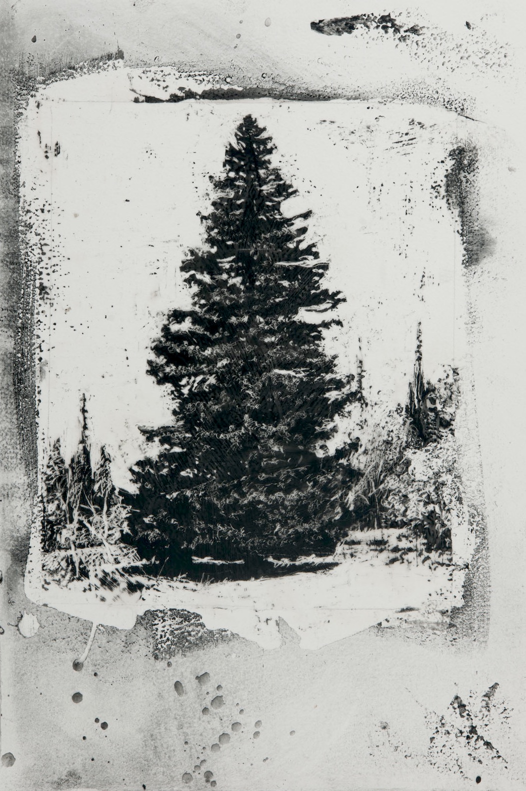 "Spruce, 24"" x 16"", charcoal and microcrystalline wax on paper, 2012"