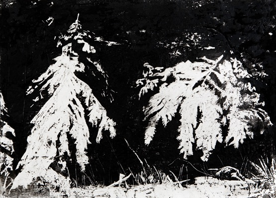 "Spruce Boughs no. 2, 22"" x 30"", charcoal and microcrystalline wax on paper, 2010"
