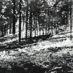 "Starkeys Hill, 24"" x 48"", charcoal and microcrystalline wax on paper, 2010"