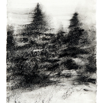 "Winter Spruce,  18"" x 12"", charcoal and microcrystalline wax on paper, 2008"